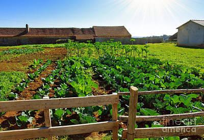 Vegetable Farm Print by Carlos Caetano