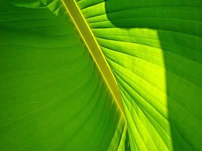Veins Of Green Print by Nick Kloepping