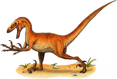 Velociraptor Print by Roger Hall and Photo Researchers