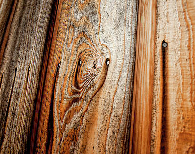 View Of Wooden  Ply Print by Veronique Regimbal photographie