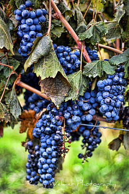 Vines And Clusters Print by Randy Wehner Photography