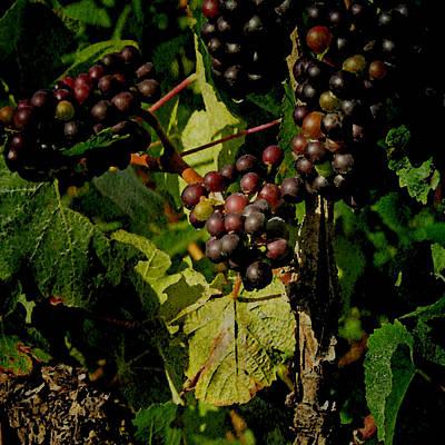 Vineyard Digital Art - Vineyard No.1 by Bonnie Bruno