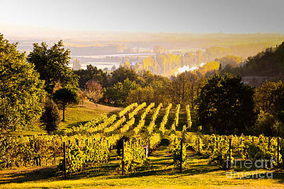 Vineyard Print by Voisin and Phanie and Photo Researchers