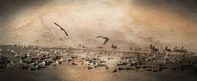 Beach Photograph - Vintage Beach Birds by Barbara Kraus - Northrup