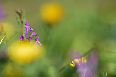 Violet In Yellow Print by Guido Montanes Castillo