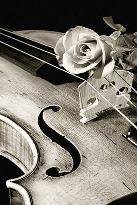Violin Digital Art - Violin And Rose by M K  Miller