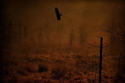 Bird Photograph - Vulture Swamp  by Emily Stauring