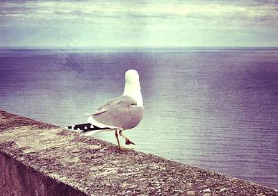 Flying Seagull Photograph - Waiting... by Marianna Mills