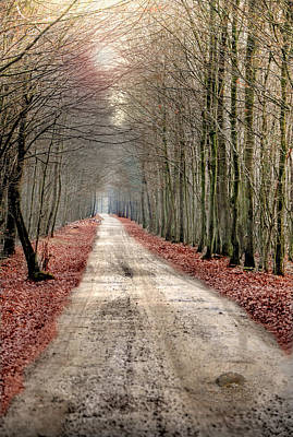 Bare Trees Photograph - Walk Through Woods by JimPix