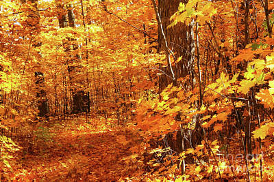 Vivid Fall Colors Photograph - Walking Through The Maple Trees  by Sandra Cunningham