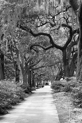 Streetlight Photograph - Walking Through The Park In Black And White by Suzanne Gaff