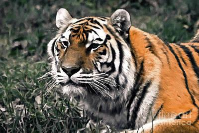 Watchful Bengal Tiger - Brush Stroke Print by Darcy Michaelchuk