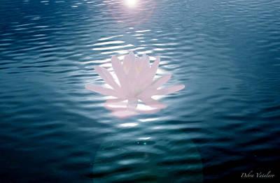 Art Spotlight Mixed Media - Water Dance Lily Pink by Debra     Vatalaro