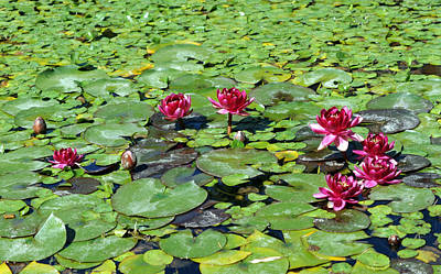 Water Lily Original by Catherine Lau