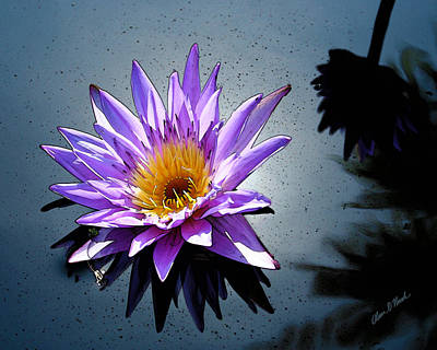 Water Lily Dream At Fairchild 2 Print by Olivia Novak