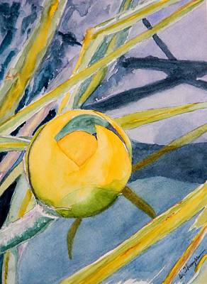 Water Lily Habitat Print by Warren Thompson