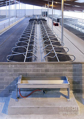 Water Trough And Cattle Cubicles Print by Jaak Nilson