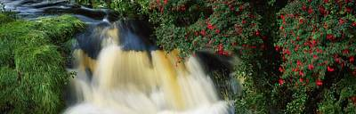 Waterfall And Fuschia, Ireland Print by The Irish Image Collection