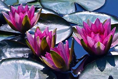 Waterlilies In Bright Sunlight Print by Byron Varvarigos