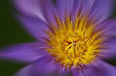 Plants Photograph - Waterlily Zoom by Susan Candelario