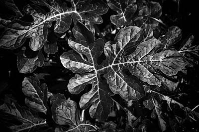 Watermelon Leaves Print by Tom Bell