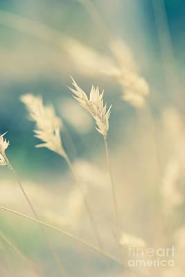 Wayside Photograph - Wayside Grass - Light by Hideaki Sakurai