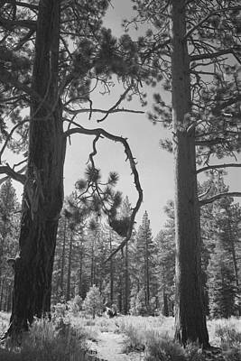 Pine Needles Photograph - We Two by Laurie Search