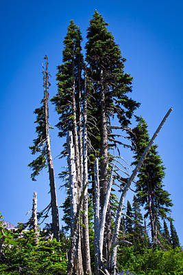 Landscape Photograph - Weathered Trees by David Patterson