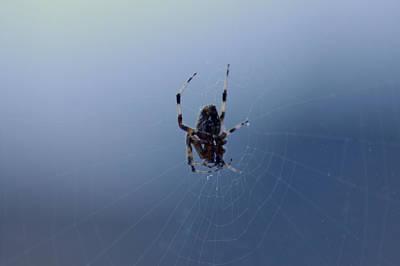 Spider Photograph - Web Weaver by LeeAnn McLaneGoetz McLaneGoetzStudioLLCcom