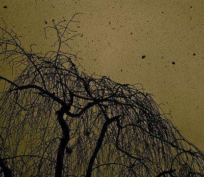 Weeping Willow In Winter Print by Thomas Brown