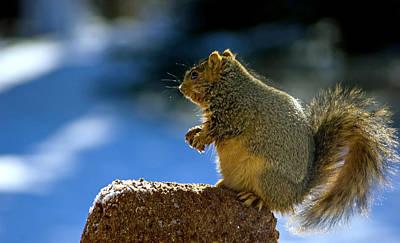 Still Life Photograph - Weight Watchers Squirrel by LeeAnn McLaneGoetz McLaneGoetzStudioLLCcom