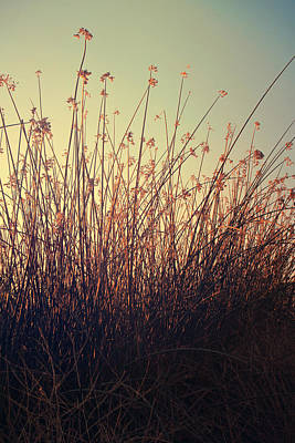 Cattails Photograph - Weightless by Laurie Search