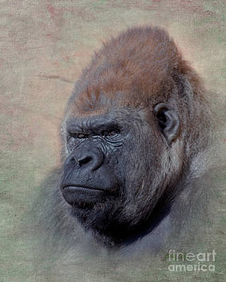 Gorilla Digital Art - Western Lowland Gorilla by Betty LaRue