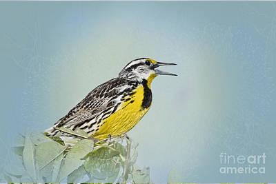 Meadowlark Digital Art - Western Meadowlark by Betty LaRue