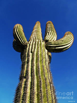 What A Big Cactus Print by Methune Hively