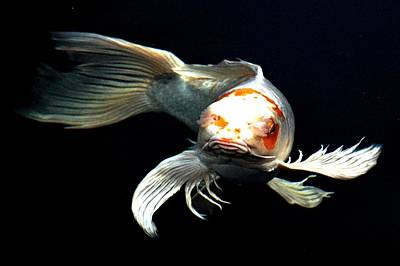 Goldfish Digital Art - What You Doin Up There by Don Mann