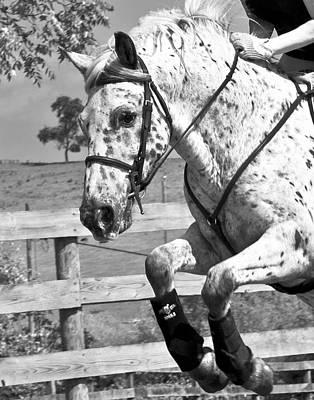 Horse Show Digital Art - Where's Toto by Betsy Knapp