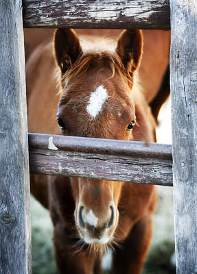 Horse Photograph - Whiskers 1 by Marilyn Hunt