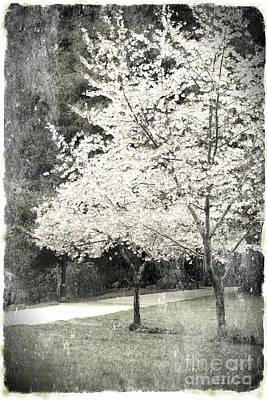 White Blooming Tree Print by Danuta Bennett
