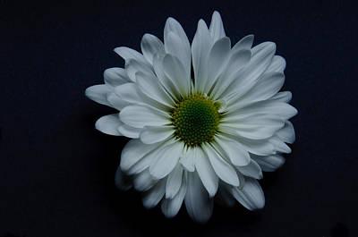 White Flower 1 Print by Ron Smith