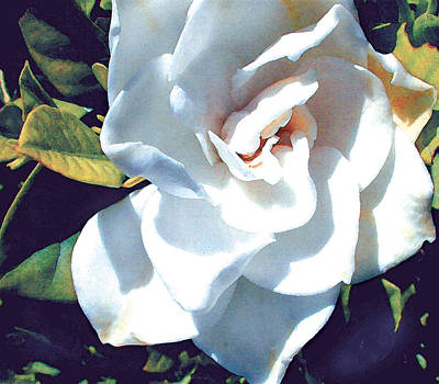 White Gardenia Print by Elaine Plesser