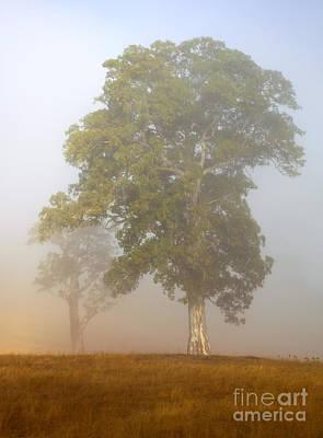 Adelaide Photograph - White Gum Dawn by Mike  Dawson