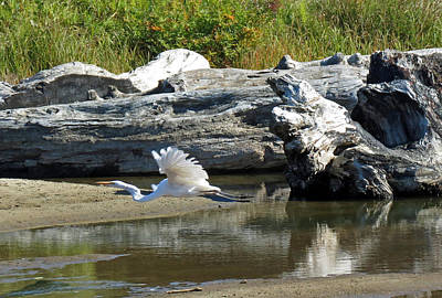 White In Flight Print by Chris Anderson