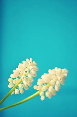 White Muscari Flowers Print by Photo by Ira Heuvelman-Dobrolyubova