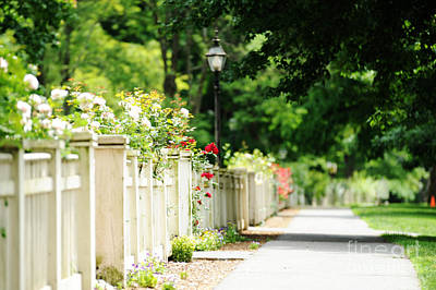 White Picket Fence And Roses Print by HD Connelly