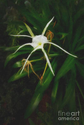 White Spider Lily Painting Print by M K  Miller