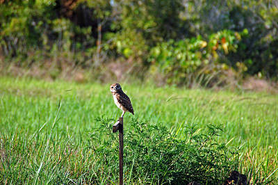 Owl Photograph - Wide Eyed Owl by Aimee L Maher Photography and Art Visit ALMGallerydotcom
