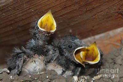 Pictur Pyrography - Wild Animals Baby Birds Www.pictat.ro by Preda Bianca Angelica
