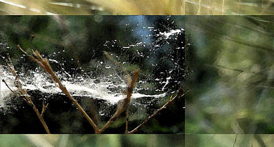 Collage Photograph - Wild Cottonwood Fibers by Gretchen Wrede