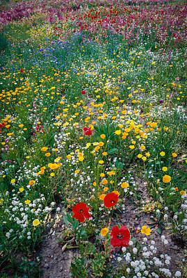 Wild Flowers 1 Print by Mike Penney